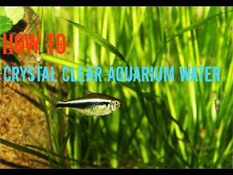 How To Get & Keep Crystal Clear Aquarium Water