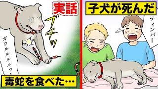 【実話】子犬が毒蛇から家族を守り…そして死んだ。
