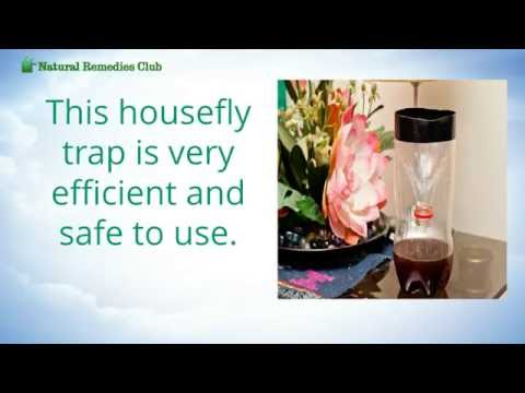 How to Make an Efficient ALl Natural Fly Trap