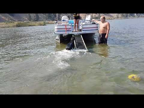 pontoon boat, dog ramp