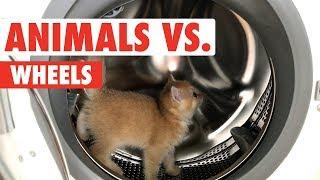 Animals vs. Wheels | Funny Pet Compilation 2017