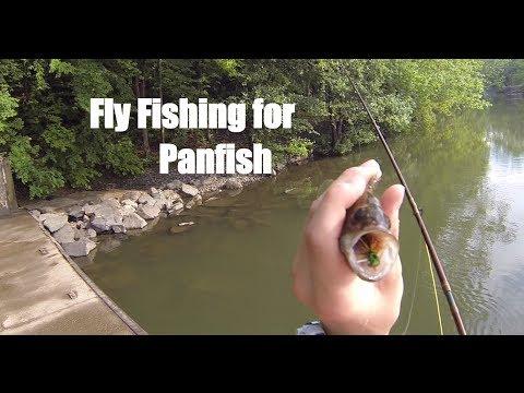 Fly Fishing for Panfish
