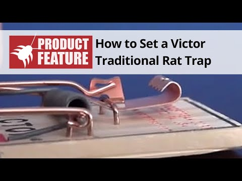 How to Set a Victor Traditional Mouse Trap