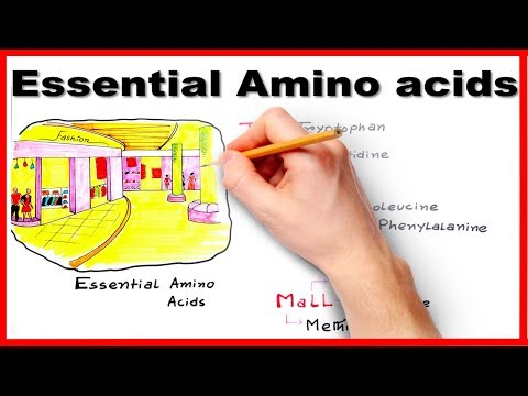 Essential Amino Acids - Easiest way to remember/ mnemonic series #7