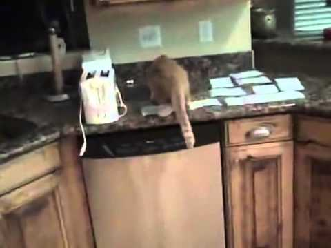 The Best Way To Keep Cats Off Counters