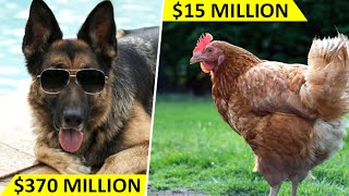Top 10 Richest Animals (Not Humans) of the World