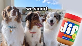 My Dogs React to Treat Hunt Challenge