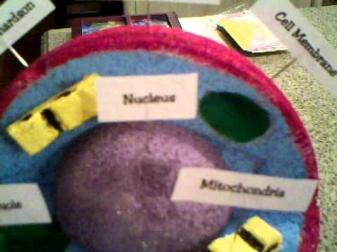 Trey's 5th Grade Science Project - Human Cell Model