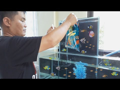 HOW & STYLE: MULTI LEVEL Aquarium tank