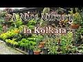 Nice Visit to an All round Nursery in Kolkata.