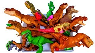Download Lots of dinosaurs, Jurassic World Tyrannosaurus T-rex dinosaur toys 공룡 티렉스 티라노 장난감 Video