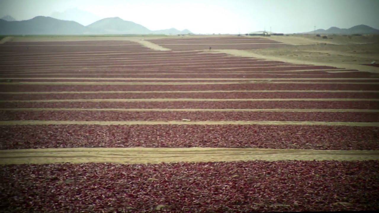 Agrícola Cerro Prieto (Video Institucional, 2009)