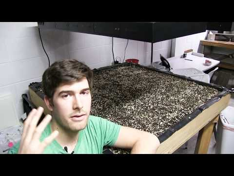 Common Reasons Your Seeds Are Not Germinating