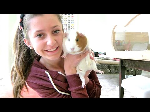 How To Clean a Guinea Pigs Cage | Step by Step Tutorial