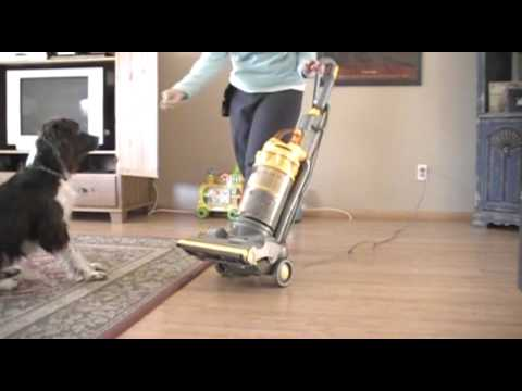 Training your dog to be fine with the vacuum cleaner