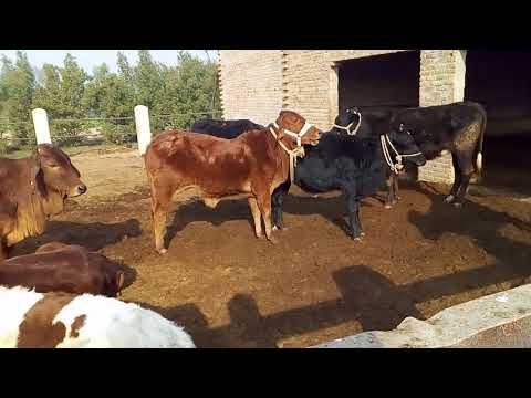Dairy farming expenditure / how to save money in dairy farming / Earn and make money through dairy