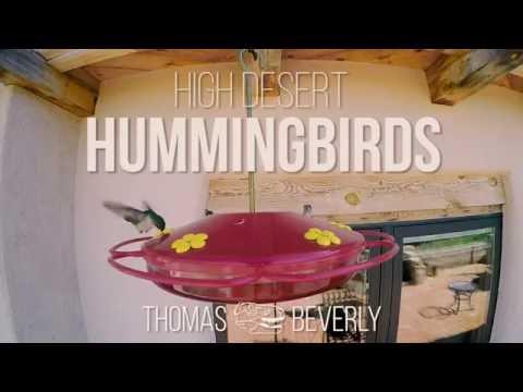 Unique Hummingbird Sound Effects - Desert Bird Recordings