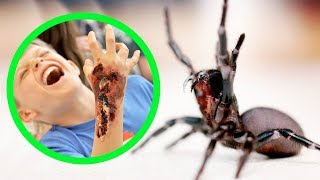 Download THE MOST DANGEROUS SPIDERS IN AUSTRALIA (TOP 10) Video