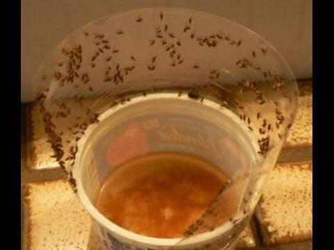 Fruit Fly Trap !!!!! How to Get Rid of Fruit Fly Easily at Home