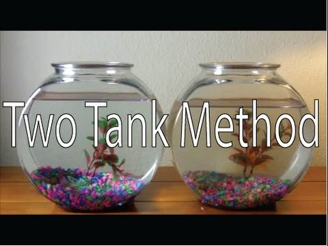 ONLY way to Clean a Goldfish Bowl  DIY Two Tank Method How to