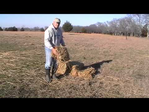 How Much Hay Do You Feed A Horse - Free Choice - Winter Feeding for Heat  Part 1