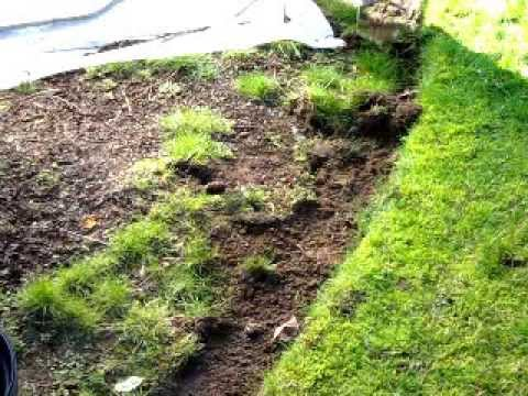How to Weed a garden bed quickly and easily with the Shrew