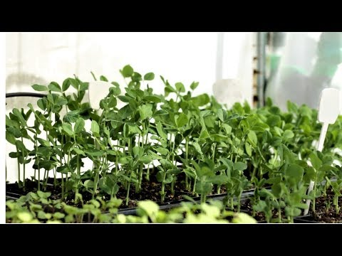How to choose the right growing season for vegetables and grow seedlings like a pro