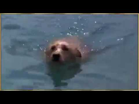 whale fish save the life of dog in sea