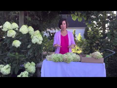 How to Make a Hydrangea Wreath