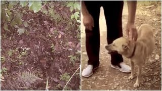 When A Dog Picked Up A Scent And Desperately Began Digging, What He Found Buried Alive Was Horrific