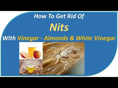 how to get rid of nits with vinegar - Almonds & White Vinegar