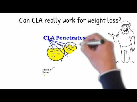 CLA Weight Loss Explained