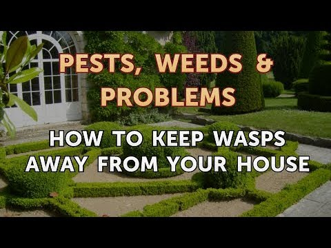 How to Keep Wasps Away From Your House