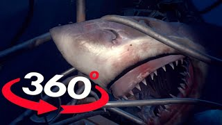 VR Videos 360 SHARK VR - OMG Will you survive? Virtual Reality 360 Video POV 180°