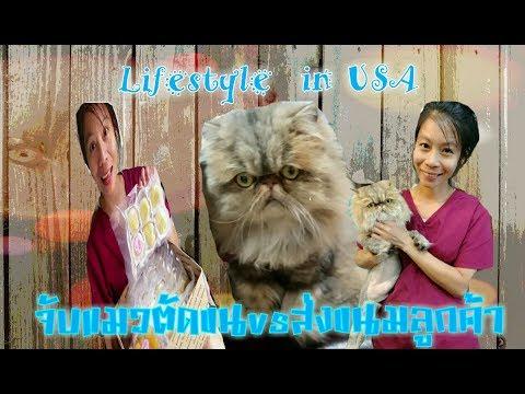พาแมวตัดขน ส่งขนมลูกค้า เม้าท์มอยหอยสังข์เรื่องแมวๆ Suntaree@Home