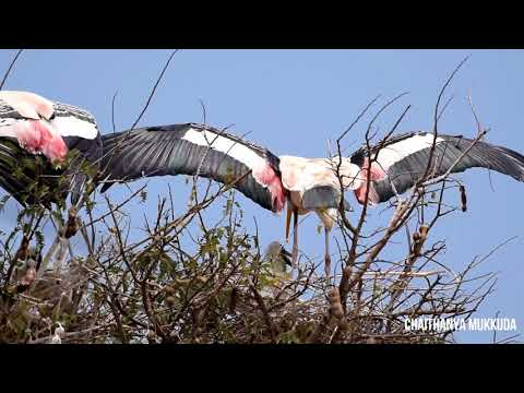 Journey to Kokkare belluru Bird sanctuary