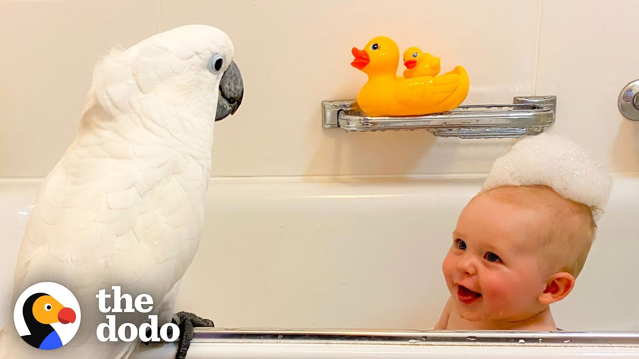 Cockatoo And Baby Boy Do Everything Together   The Dodo Soulmates