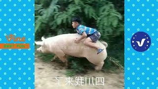 Funny Videos 2017 People Doing Stupid Things P50