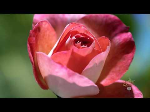 Healing Moment: Flowers