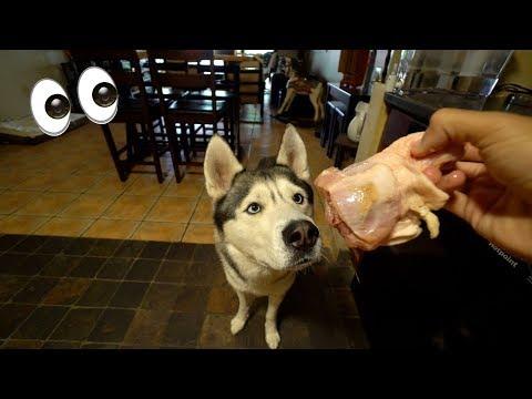 My Husky Eats a Raw Chicken Bone! (ASMR)