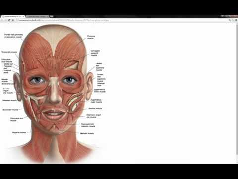 02 Face Structure