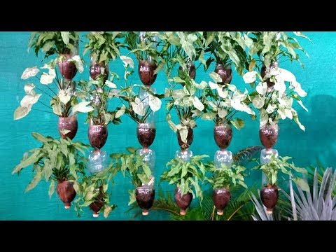 How to Make A Hanging  disposable Bottle Garden