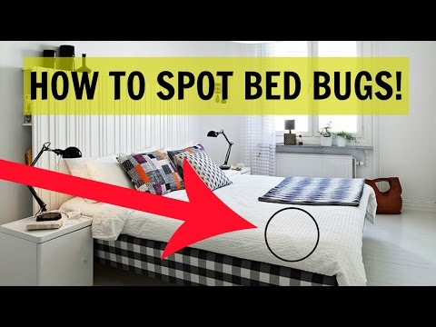 HOW TO SPOT BED BUGS!