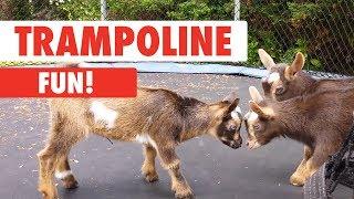 Trampoline Fun!