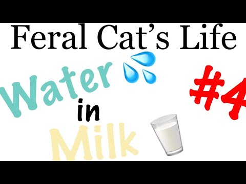 Feral Cat's Life 4 - Water in Milk