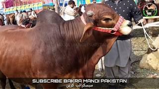 bakra-bakra Pakfiles Search Results (Browse Pakistani Community