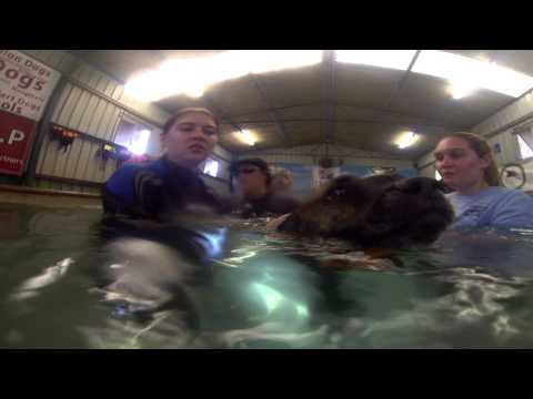 K9 SWiM - Hydrotherapy Centre For Dogs