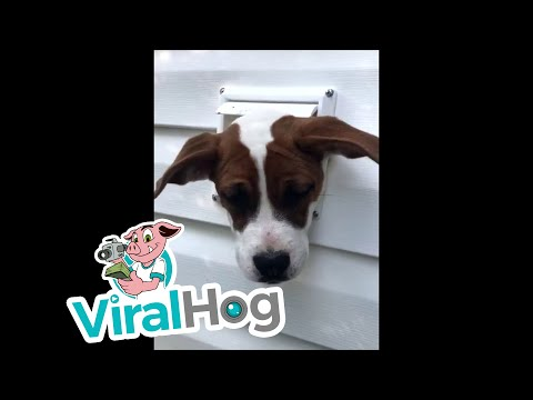 Dog Gets Head Stuck in Unusual Spot || ViralHog
