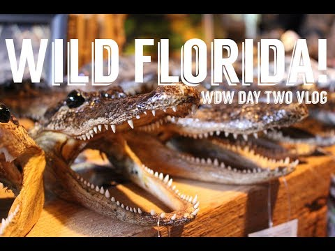 WILD Florida Airboats and Gator Park! Anniversary Vacation Day Two June 2017
