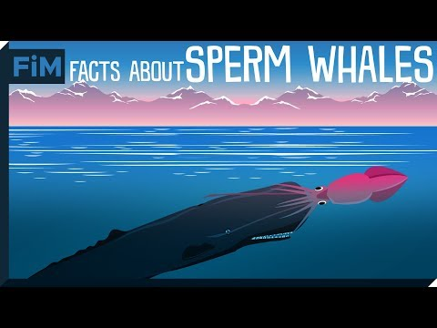 5 Amazing Facts You Didn't Know About Sperm Whales